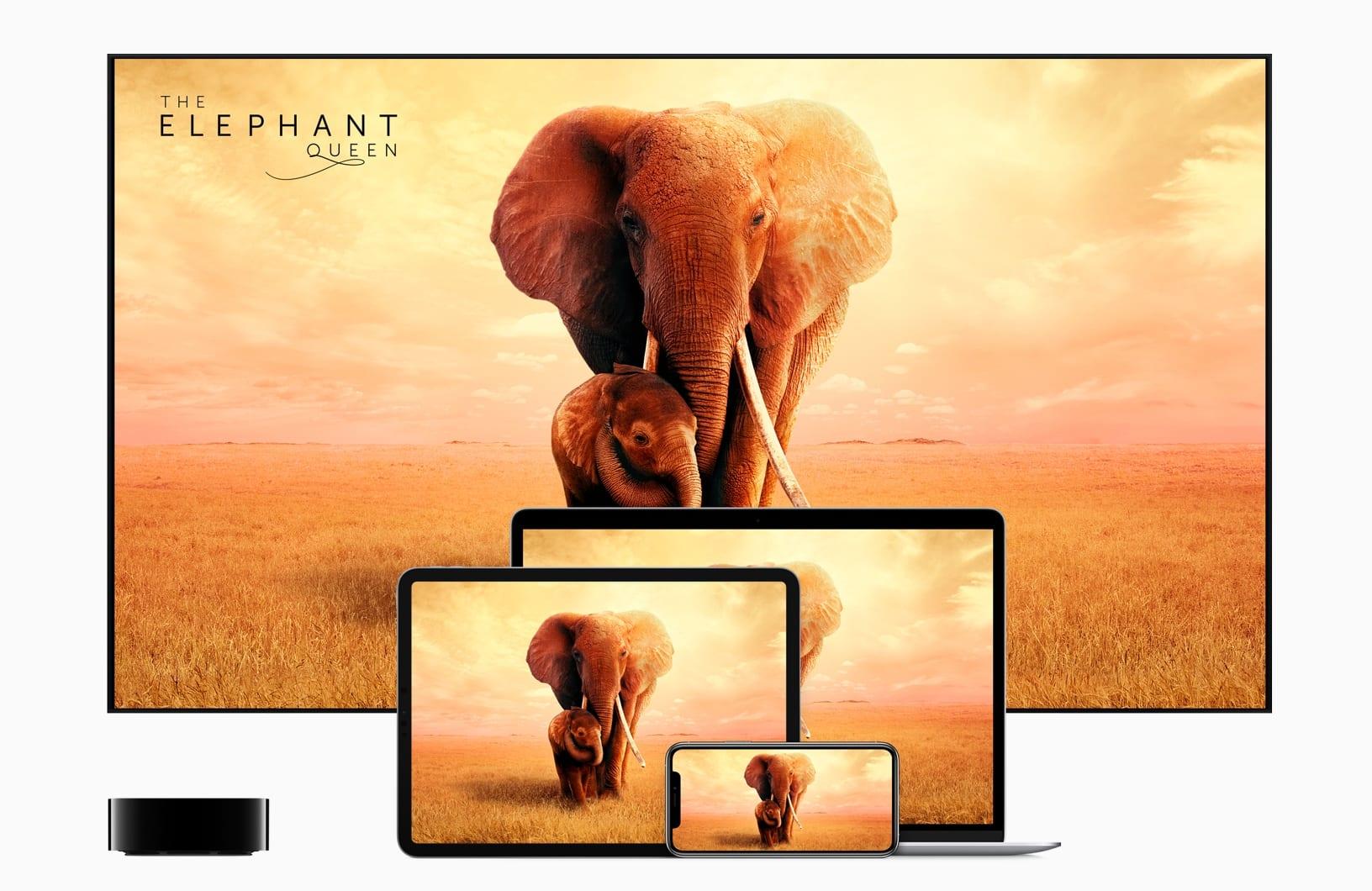 apple tvplus now available the elephant queen 11119 - Apple TV+ je tu, všetko čo potrebujete o službe vedieť