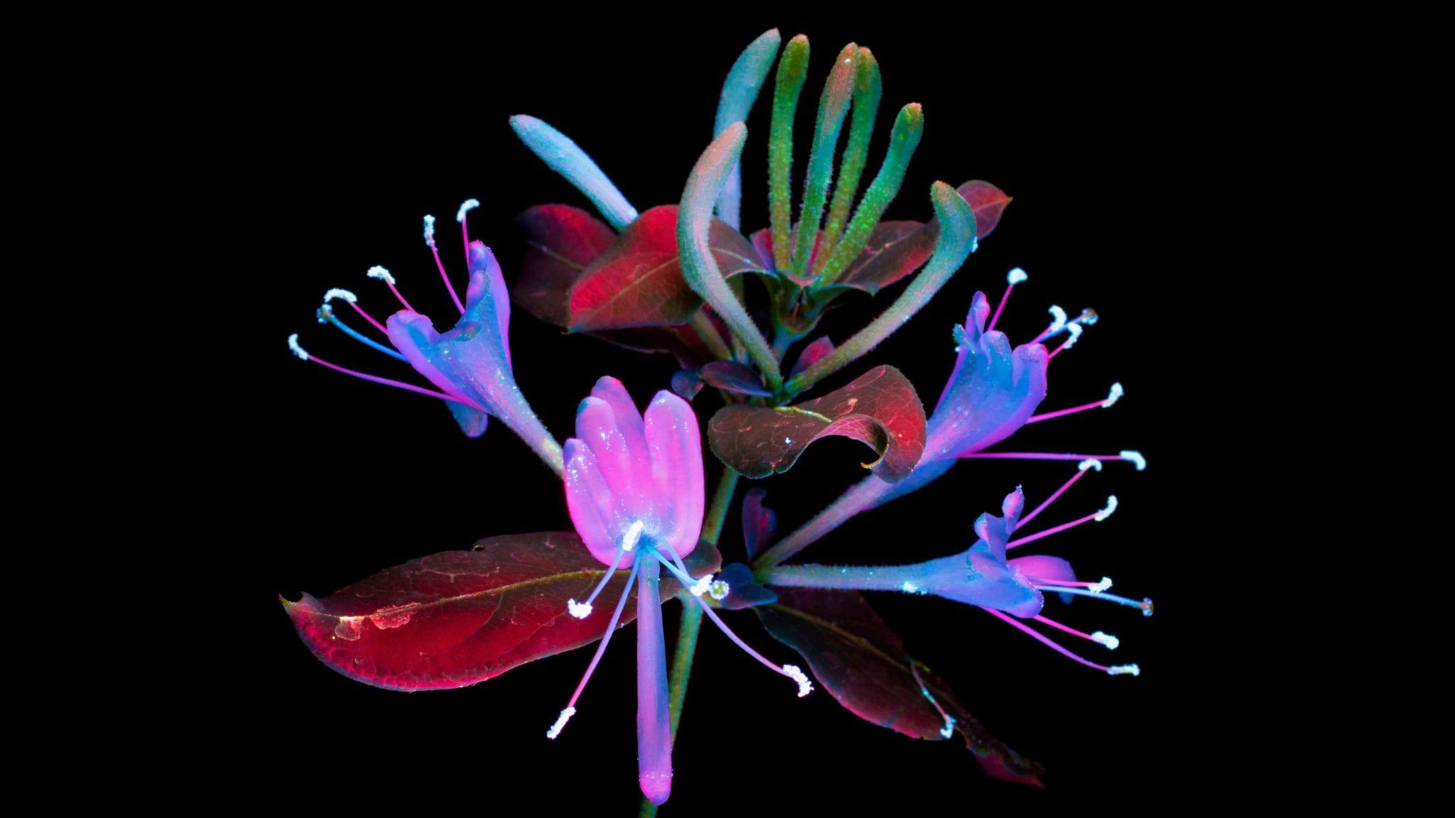 Flower 2 - Stiahnite si vyše 20 nových pozadí z macOS Mojave