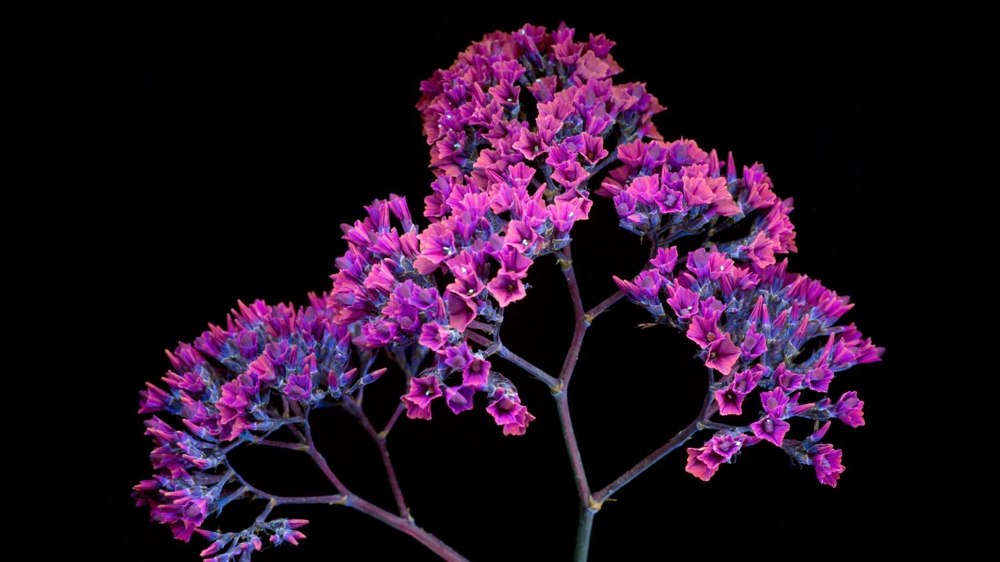 Flower 4 - Stiahnite si vyše 20 nových pozadí z macOS Mojave