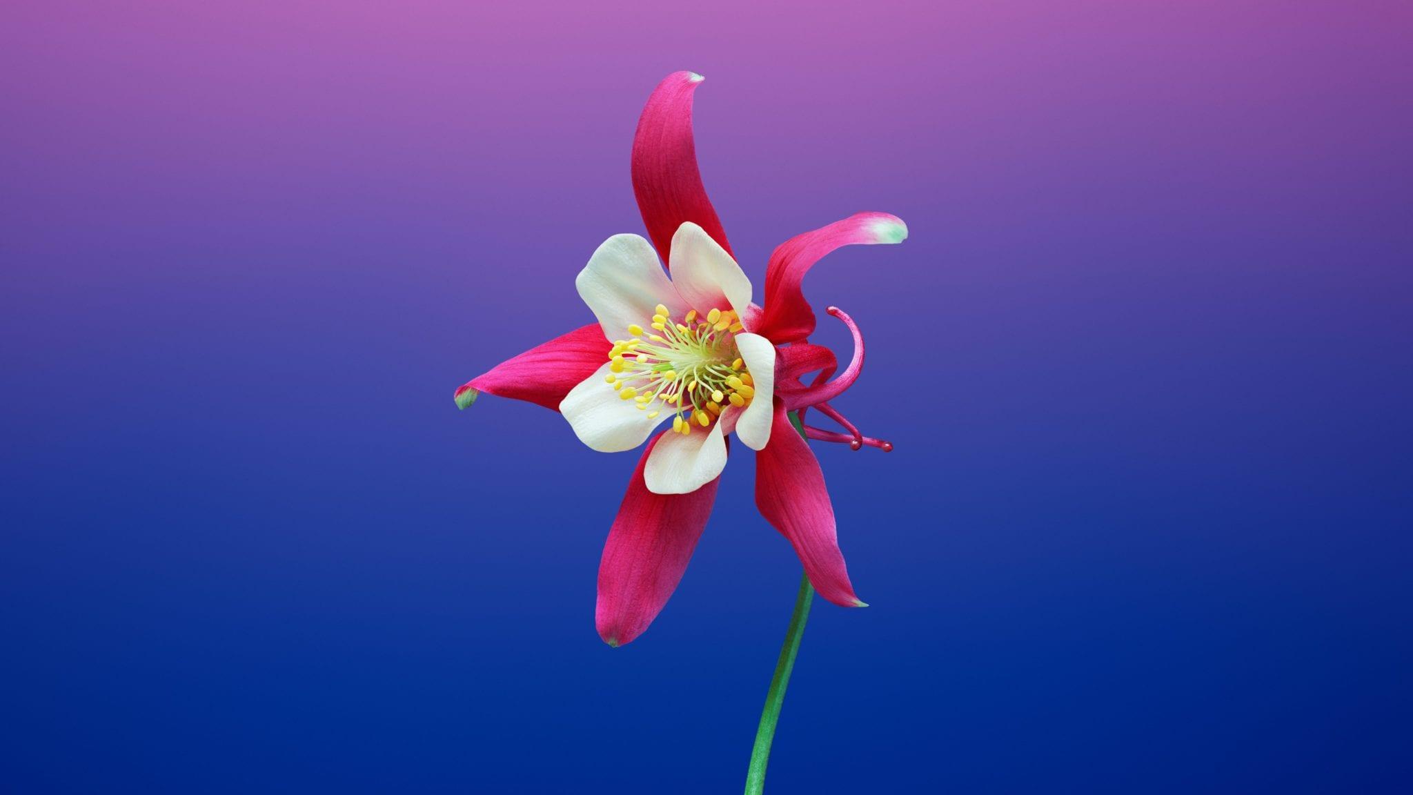 Flower 6 - Stiahnite si vyše 20 nových pozadí z macOS Mojave